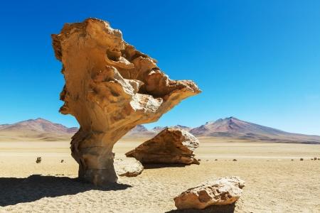 arbol: Arbol de Piedra - La formaci?n de c?lculos de rock en Bolivia