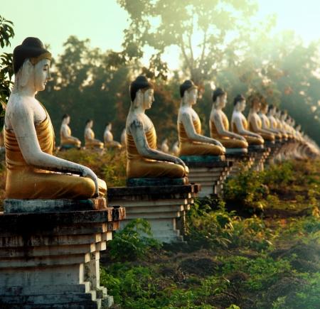 Buddhas statue garden photo