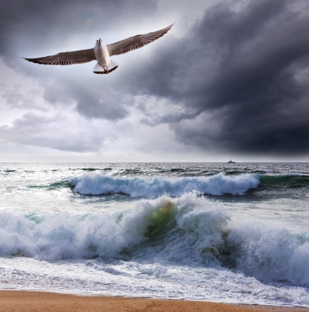 storm sea: Sea gull and waves Stock Photo