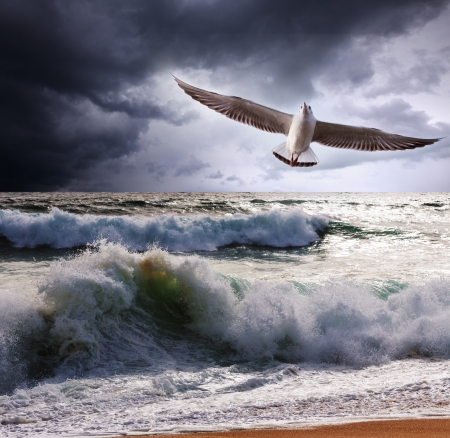 breeze: Sea gull and waves Stock Photo