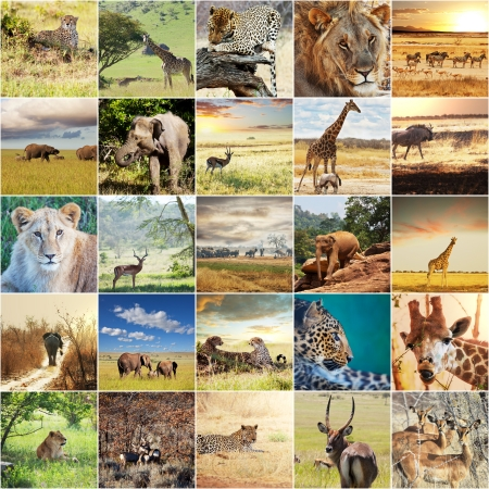 namibia: african safari collages