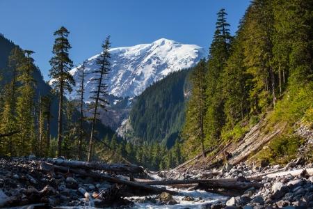 rainier: Mt Rainier Stock Photo