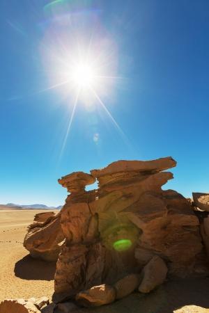 arbol: Arbol de piedra - formaci�n rocosa de piedra en Bolivia Foto de archivo