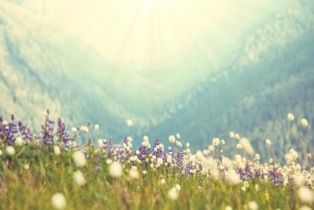 mountain meadow: mountains meadow Stock Photo