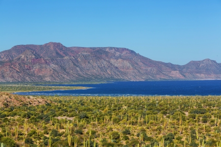 Campos de cactus en México, Baja California