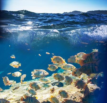 hardcoral: fish under water Stock Photo