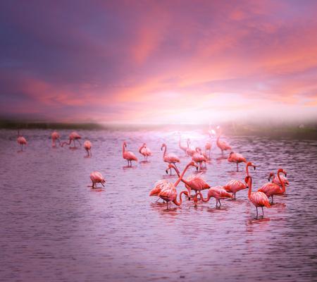 flamingo in Bolivia photo