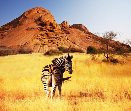 Zebras bei Sonnenuntergang