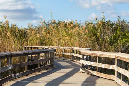wetland conservation: Boardwalk in swamp