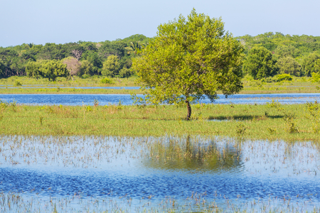 flooded: Flooded field