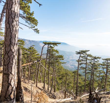 melodious: Crimean mountain Stock Photo