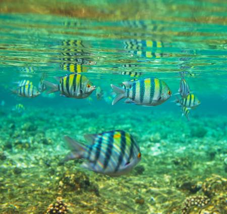haiti: Coral fish in  Red Sea,Egypt