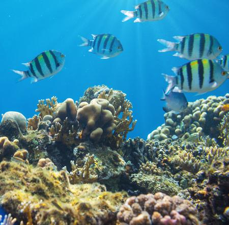 peces de acuario: Peces de coral en el Mar Rojo, Egipto