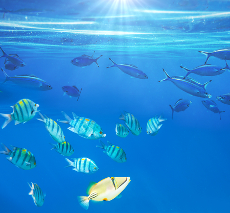 live coral: Coral fish in  Red Sea,Egypt
