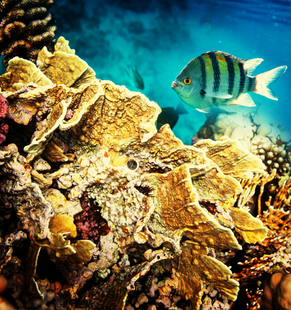 Coral fish in  Red Sea,Egypt Stock Photo - 27285233