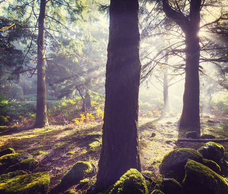 woodland  horror: Magic misty in forest
