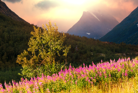 scandinavian landscape: Norway landscapes