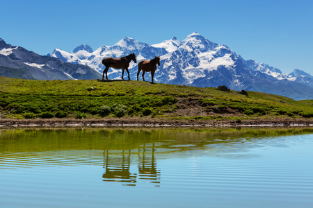 horse in mountains photo