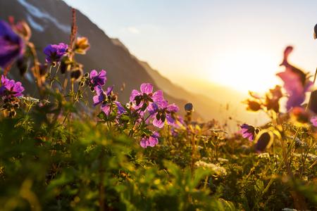 mountains meadow photo
