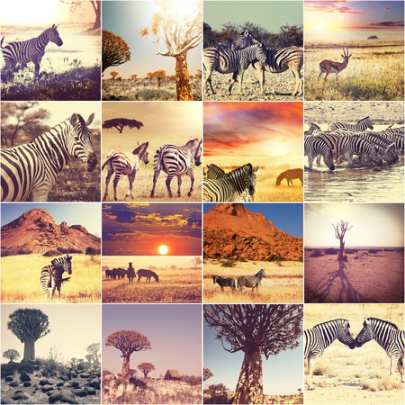african safari collages photo
