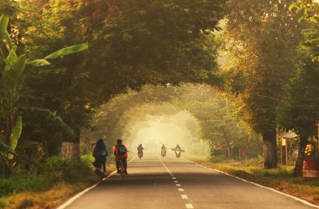 lejos: Camino en el bosque Foto de archivo
