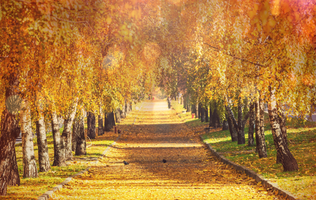 woodscape: Beautiful autumn alley