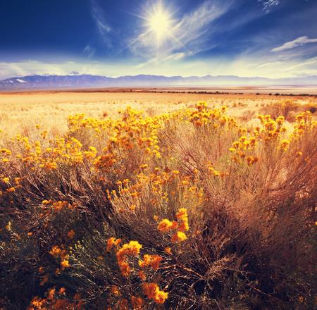 Prairie  landscapes photo
