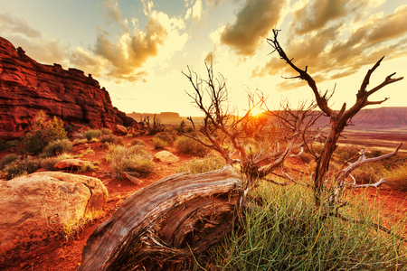 American landscapes photo