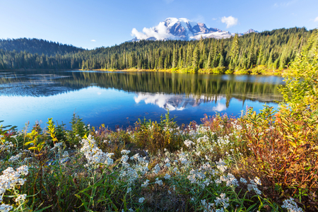rainier: Mount Rainier national park, Washington