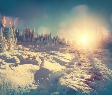 white winter: Winter scene Stock Photo