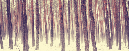 early spring snow: Forest in spring season