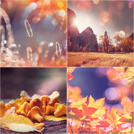autumn orange collage photo