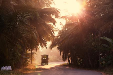 sri lanka: Road on Sri Lanka