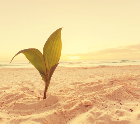 small palm tree on beach photo