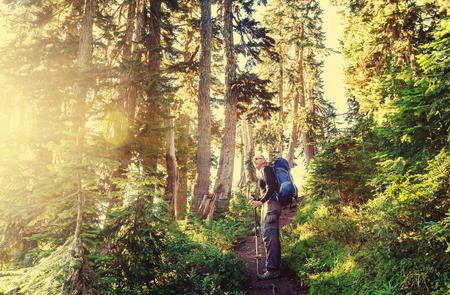 Boy backpacker in forest Stock fotó