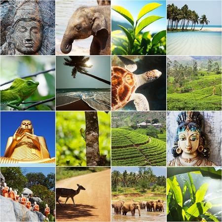 스리랑카 스톡 콘텐츠 - 34230206