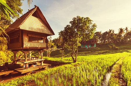 rice terrace: Rice terrace in Indonesia