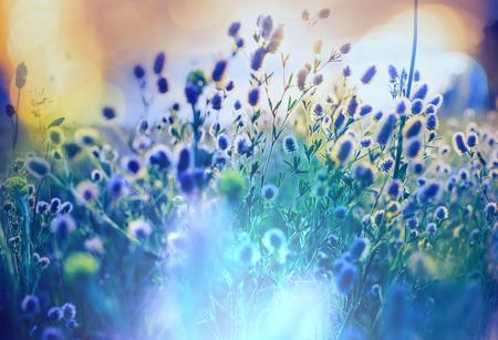 Zomer bloemen weide