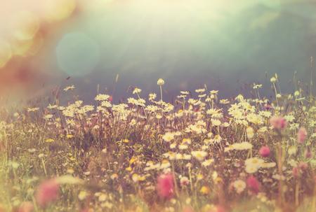 paisajes: monta�as prado