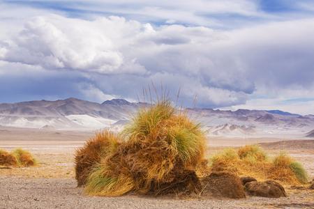 vastness: Landscapes in Northern Argentina Stock Photo