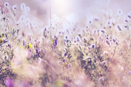 夏の花の草原