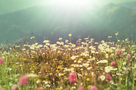 flores: mountains meadow Stock Photo