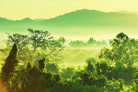 selva: selva tropical en México