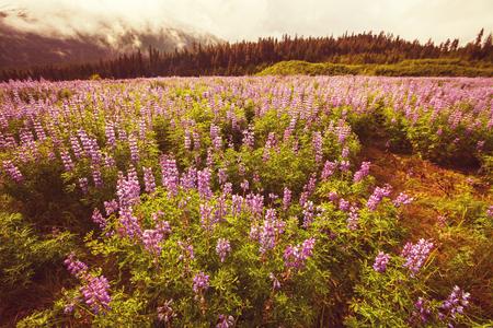 alaska: Alaska landscapes