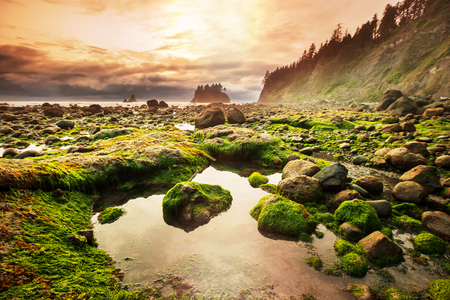 water park: Olympic National Park landscapes Stock Photo