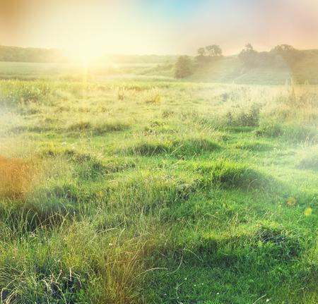 calm background: summer grassland