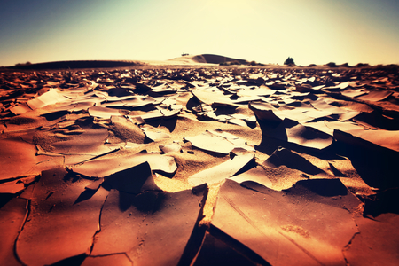 mire: Drought land Stock Photo