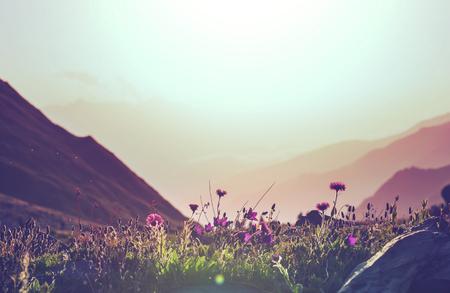 산 초원 스톡 콘텐츠 - 37910408