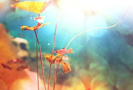 Mexican cenote underwater photo