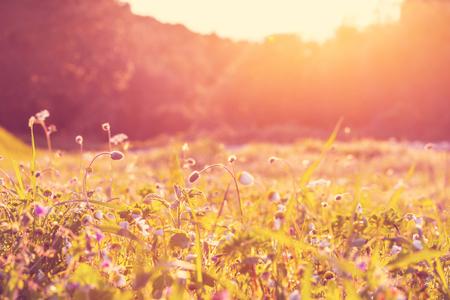 日当たりの良い草原
